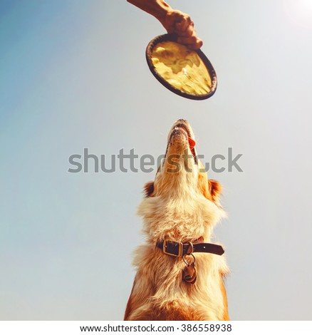 a dog jumping for a floppy frisbee like disc in front of a bright blue sky toned with a retro vintage instagram filter app or action effect  - stock photo