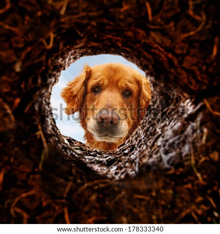 a dog peeking into a dirt hole in the ground  - stock photo