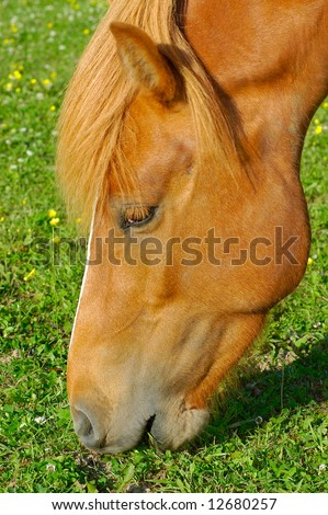 A horse on a field eating grass