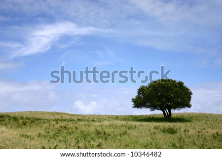- a lonely (or single) tree in the Great Otway National Park, Victoria, Australia - stock photo