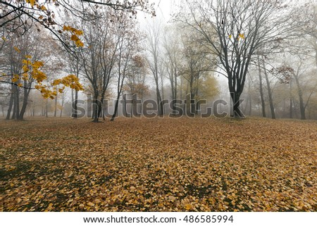 a park in the autumn, during cloudy weather