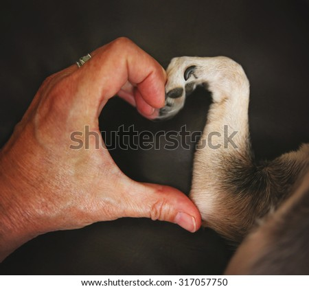 a person and a chihuahua dog making a heart shape with the hand and paw - stock photo