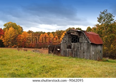 A picture of a old barn and pasture with deer in the background during fall with colors - stock photo