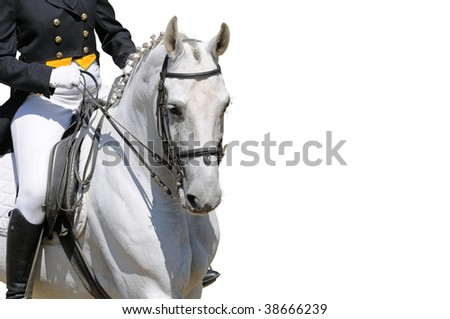 A portrait of gray dressage horse isolated on white - stock photo