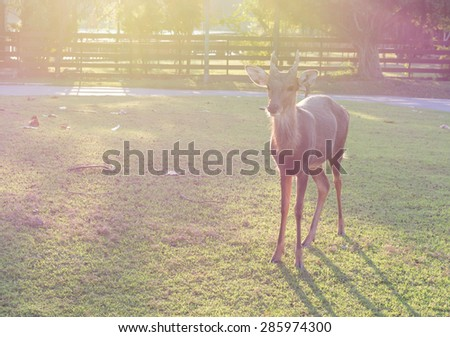 A silhouette of a deer standing in the field on sunset time,vintage tone image - stock photo
