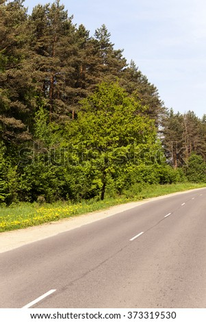 a small asphalt road passing through the forest. spring