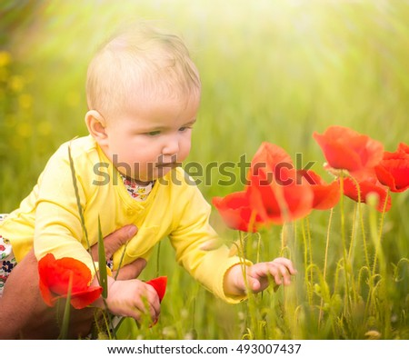 A small child playing in the field with red poppies . The baby .