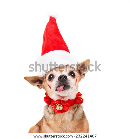 a tiny chihuahua dressed in a christmas outfit