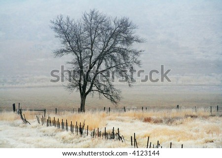 a tree in a pasture on a very foggy day - stock photo