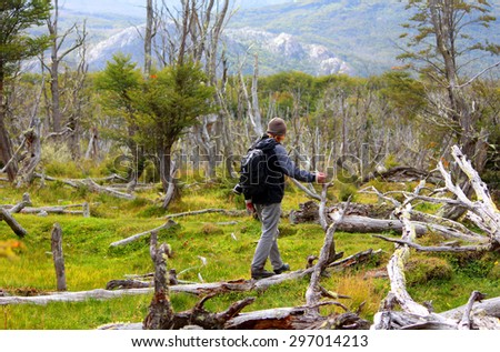 A young man walks around the trunks of trees, Patagonia