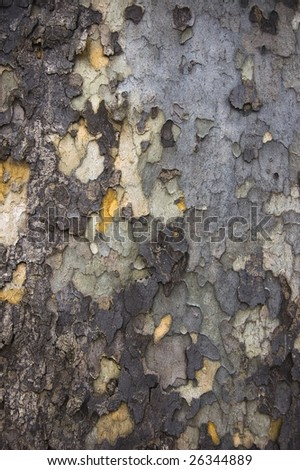 abstract background of  bark surface for design - stock photo