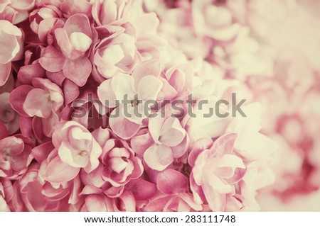 Abstract  floral background of spring lilac - stock photo