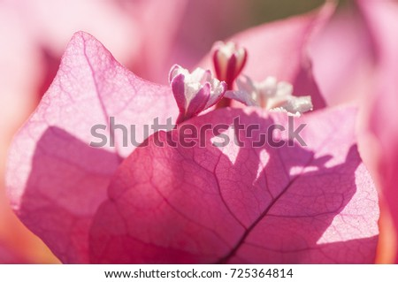 Abstract pink floral macro background, Beautiful flower background, Abstract flower background.