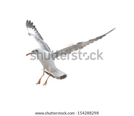 Action of seagull bird - stock photo