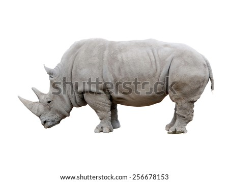 African Rhino isolated on a white background