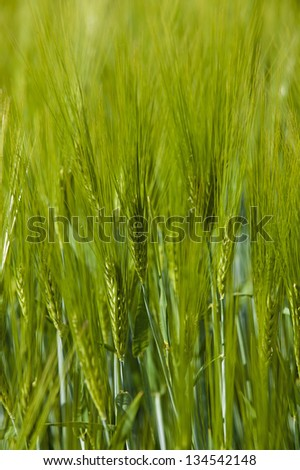 agricultural field. - stock photo