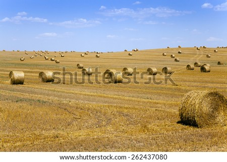 agricultural field on which lie a straw stack after wheat harvesting - stock photo