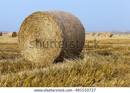 Agricultural field on which the harvesting of cereals, wheat.