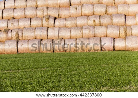 Agricultural field on which were left lying Straw Haystacks after the wheat harvest, grain field, farming and organic foods, autumn season - stock photo
