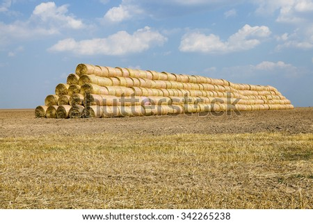 agricultural field where crops grown and harvested cereals.He curled in a stack of straw - stock photo