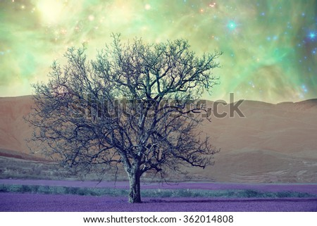alien landscape with alone tree over the night sky with many stars - elements of this image are furnished by NASA - stock photo