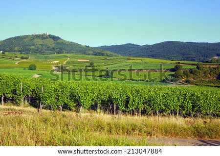 Alsace, France. Panoramic view with vineyards at summer