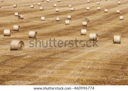 an agricultural field on which are laid out straw haystacks after the harvest of cereals, wheat