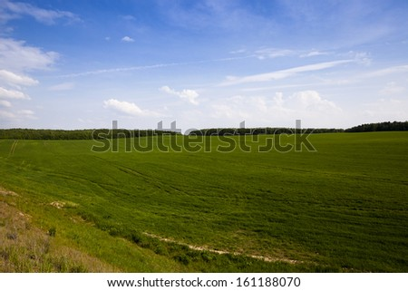 an agricultural field on which grow up green oats