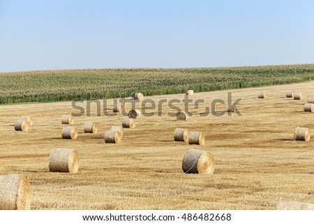 an agricultural field on which lie Straw Haystacks after harvest, blue sky