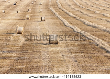 an agricultural field on which lie Straw Haystacks after the harvest, a small depth of field