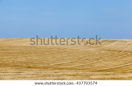 an agricultural field on which lie Straw Haystacks after the harvest, a small depth of field - stock photo