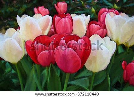 An original closeup photograph of white and pink tulips transformed into a colorful painting
