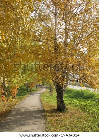 Autumn, birch, road