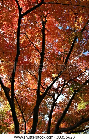 Autumn Colours in  Japan - stock photo