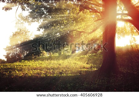 Autumn forest pictorial nature - sunrise with bright sunbeams breaking through the tree branches - stock photo