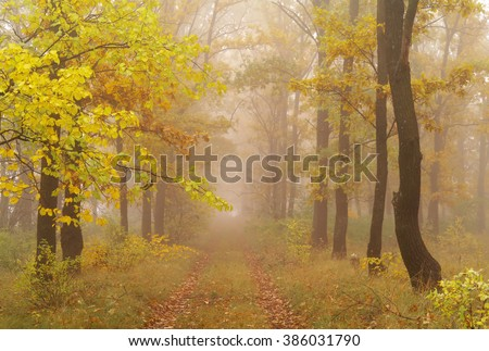 autumn forest with misty morning  - stock photo