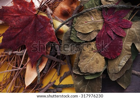 Autumn leaves collage - stock photo