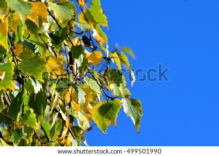 Autumn leaves on blue sky
