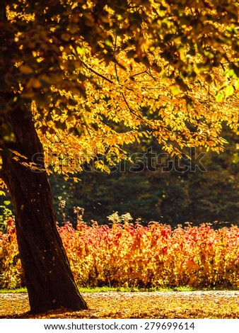 Autumn scenery. Yellow orange leaves trees and lushes in city park, beautiful gold fall. - stock photo