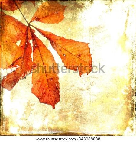 Autumnal leaf of horse chestnut. Vintage background. - stock photo