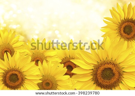 Background made of  yellow sunflowers.Sunflower natural background