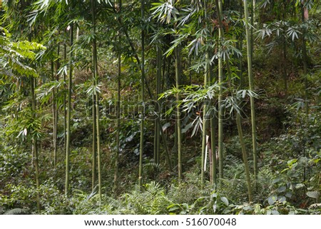 Background texture of bamboo stems and green space