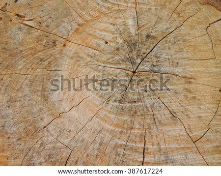 Background texture of wood.