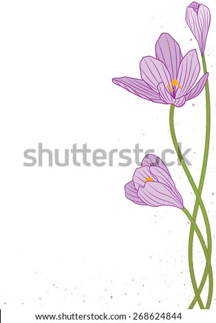 background with flowers of crocus - stock photo