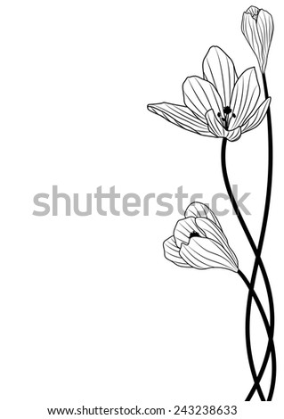 background with flowers of crocus in black and white colors