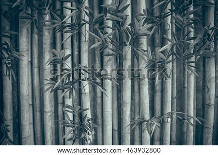 Bamboo fence background,black and white style