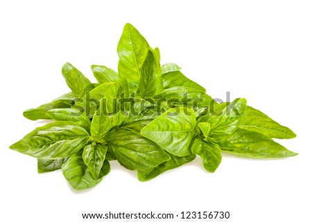 basil bunch  isolated on white - stock photo