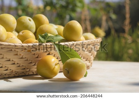 Basket of yellow plums  - stock photo