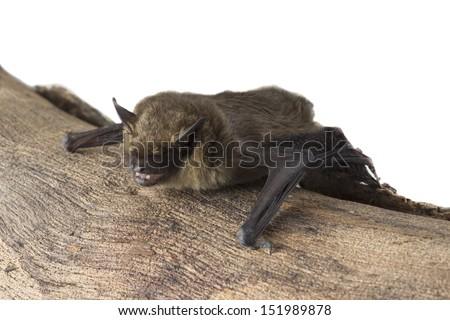 bat sitting on tree trunk - stock photo
