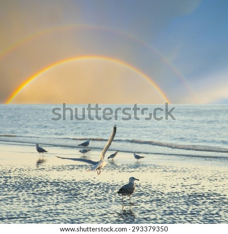 beach with birds - romantic view - stock photo